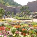 Fête des plantes et du massif à Fontfroide